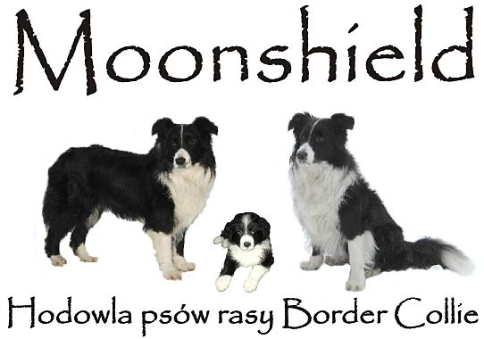Moonshield hodowla psów Border Collie